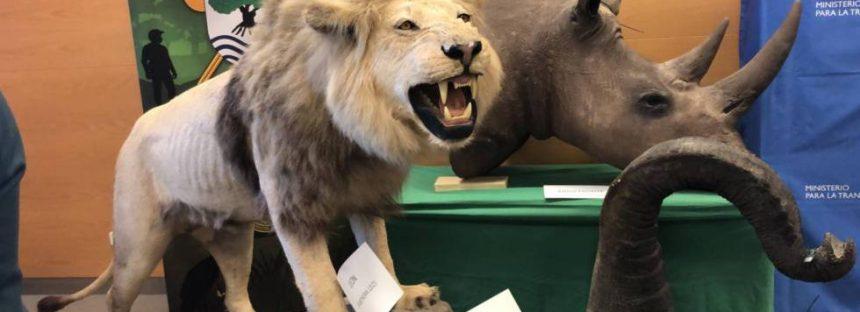 Incautados leones, leopardos, rinocerontes y otras especies protegidas disecadas en Alicante