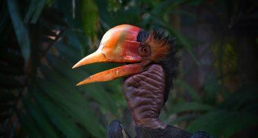 Los animales en extinción esperan hasta dos décadas a que se prohíba comerciar con ellos