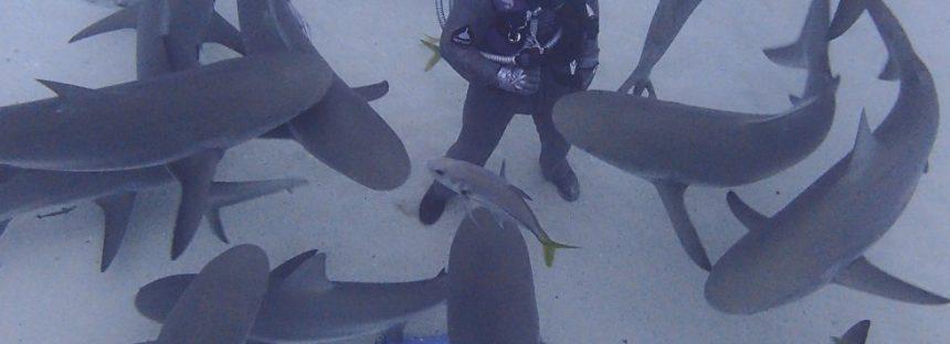 El hombre que juega con los tiburones