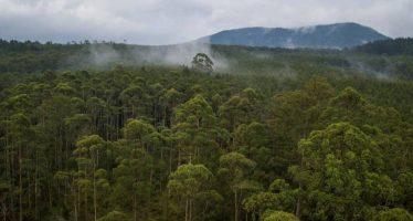 Noruega empieza a pagar a Indonesia por reducir la deforestación