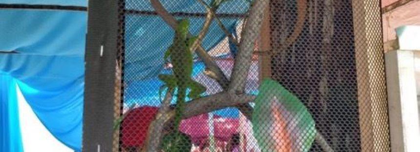 Aseguran 19 ejemplares de vida silvestre en tianguis