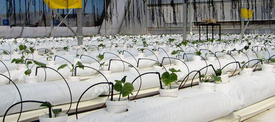 Fertirriego sustentable en zonas áridas y semiáridas