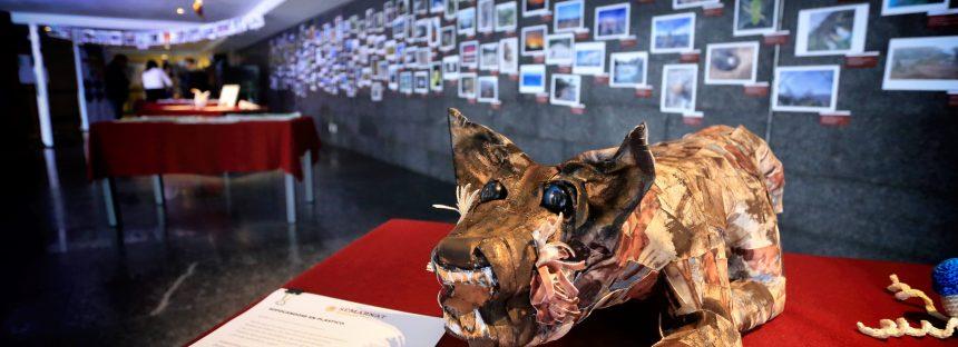 Expo Arte y medio ambiente muestra la creatividad de 500 artistas de la comunidad SEMARNAT