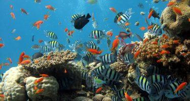 Una enfermedad bacteriana pone en peligro los arrecifes de la costa sur de Florida