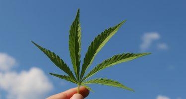 Apuestan por productos hechos con cannabis para sustituir al plástico
