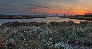 Alemania apoyará la protección de las turberas: un aliado natural de la acción climática