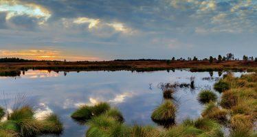 Humedales: una respuesta natural ante el cambio climático