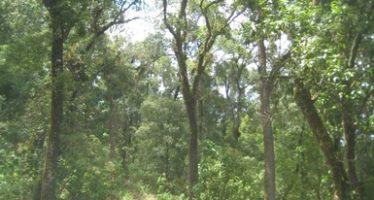 """""""Programa de inspección y vigilancia 2019"""" para la reserva de la biósfera en Colima"""