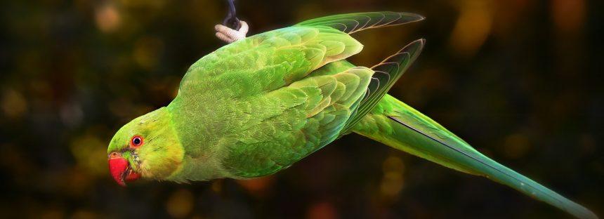 21 especies de aves en peligro por el tráfico ilegal en México