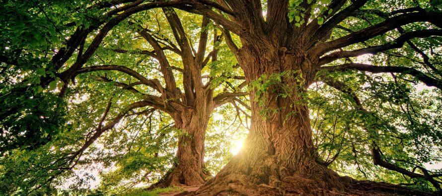 Un estudio identifica especies de árboles para la reforestación resistente al clima