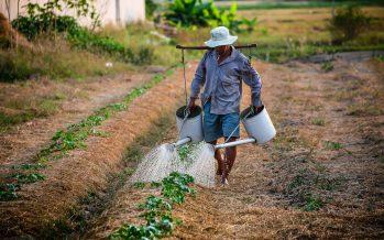 La pérdida de la biodiversidad amenaza la variedad de alimentos que conocemos