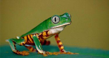 El avance humano amenaza con dejar sin espacio a miles de especies