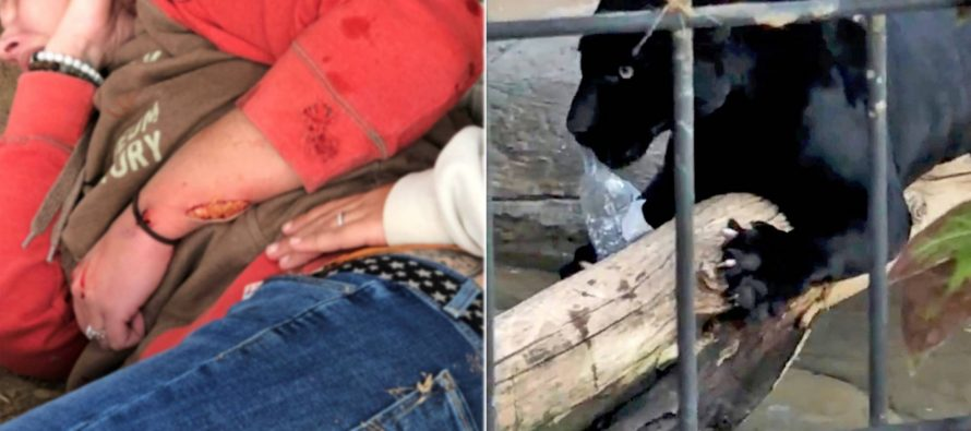 Un jaguar ataca a una mujer que quería hacerse un 'selfie' en su jaula
