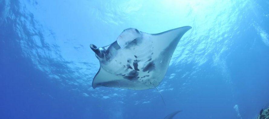Salvar nuestros mares se ha vuelto un asunto personal