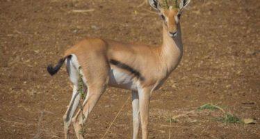 El riesgo de extinción de 1.700 especies animales aumentará en 2070 por el uso extensivo del suelo