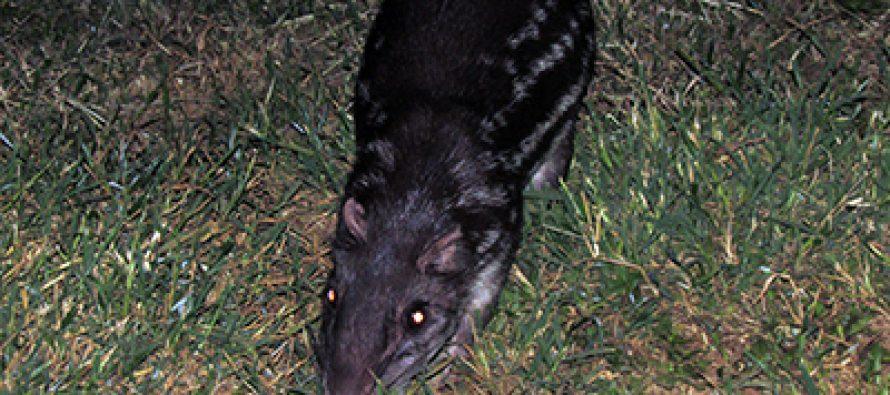¿Será posible recuperar especies animales?: el caso del Santuario del Bosque de Niebla en Xalapa