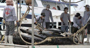 Aprueban 2 mil 800 toneladas como cuota de captura de atún aleta azul (Thunnus orientalis) en el Pacífico para 2019 y 2020