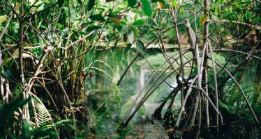 Importancia de los humedales y su protección y conservación