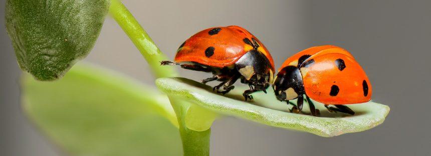 La desaparición de los insectos es una dura advertencia para la humanidad