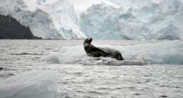 Aumento de temperatura de 3ºC a 5ºC será inevitable en el Ártico