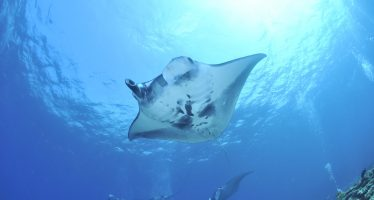 España lidera un pionero proyecto para conservar a tiburones y rayas mediante la reproducción asistida
