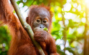 Cómo se enganchó el mundo al aceite de palma