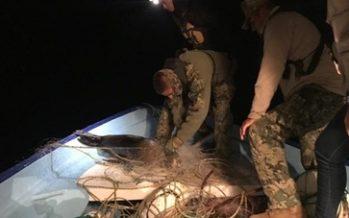 Presentan denuncia penal por muerte de 4 lobos marinos en la ANP de Baja California Sur