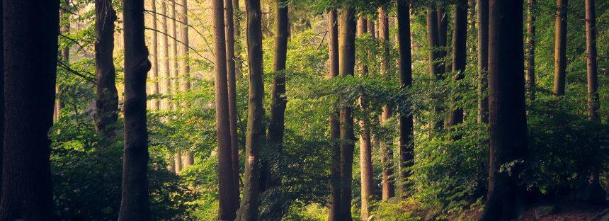 La recuperación de los bosques del centro del país mejora las condiciones de los que viven es estas zonas