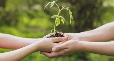 Necesitamos entrar a la vanguardia en desarrollo tecnológico sustentable