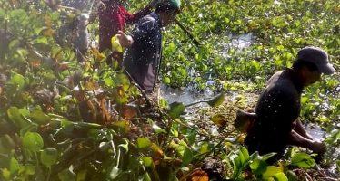 Acciones conjuntas para proteger el hábitat del manatí en Tabasco