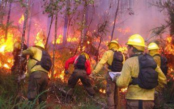 Coordinan esfuerzos con gobiernos estatales y municipales para combatir incendios forestales
