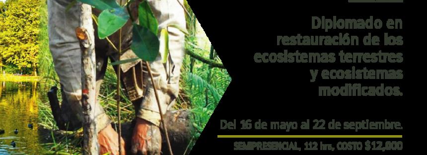 Diplomado en restauración de los ecosistemas terrestres y ecosistemas modificados