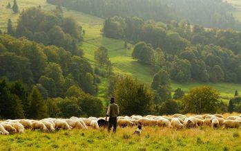 La UE busca la ayuda de los agricultores y de los niños para reforestar el continente