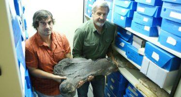 Los humanos aceleraron la extinción de los grandes mamíferos de Sudamérica