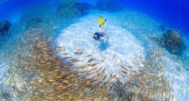 Nueva guía práctica para el manejo de las áreas marinas protegidas