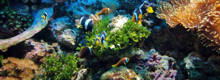 La Gran Barrera australiana sufre una reducción de especies sin precedentes