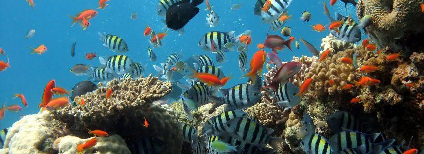 Publican el primer atlas mundial interactivo de arrecifes de coral