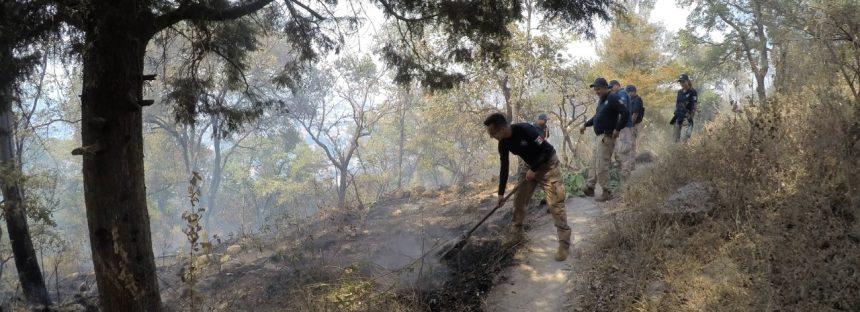 Quien provoque incendios forestales podría ser sancionado con 9 años de cárcel o hasta un cuarto de millón de pesos