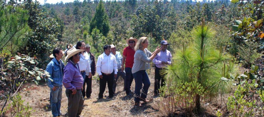 Chiapas comprometido a cuidar de sus bosques