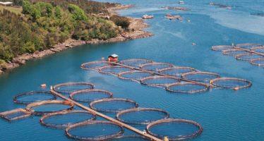Acuacultura, producción y conservación de organismos acuáticos