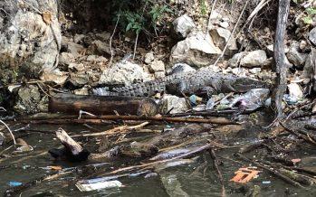 El plástico del Cañón del Sumidero mató a cocodrilo en peligro de extinción