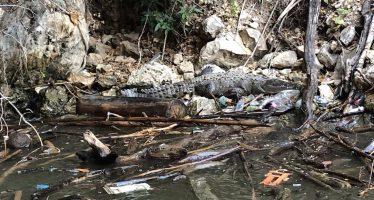 Se dará especial atención al problema de residuos en el Cañón del sumidero