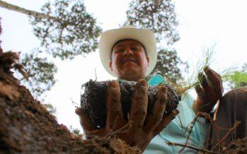 Cumple la CONAFOR, 18 años como institución rectora del sector forestal de México