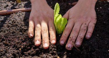 Los huertos escolares, alternativa de educación agroecológica y difusión de la diversidad biocultural