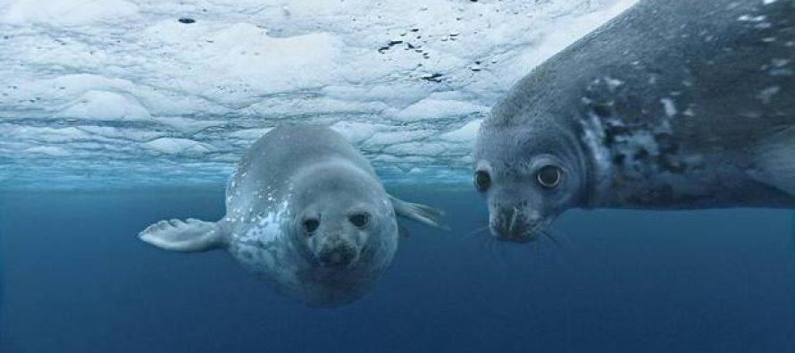 Hacia la sostenibilidad de los mares y los océanos