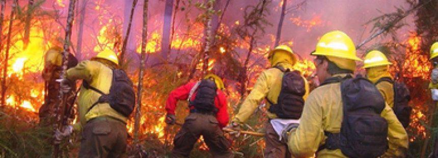 Se continuará aplicando la ley vigente respecto a cambio de uso de suelo en terrenos incendiados