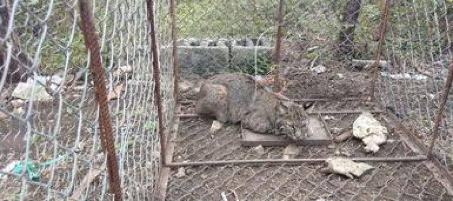 Rescatan ejemplares de vida silvestre en Nuevo León