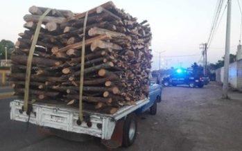 Aseguran 14.839 m3 de productos forestales ilegales en la reserva de la mariposa monarca