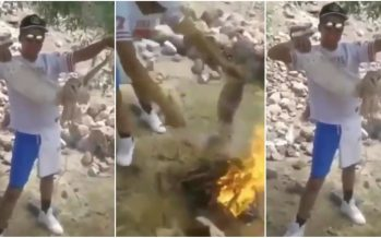 PROFEPA interpone denuncia por muerte de lechuza en Durango