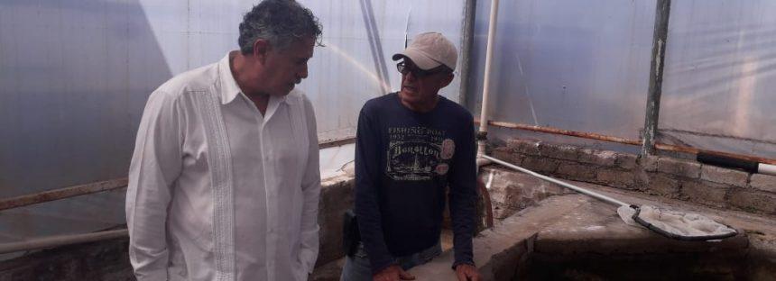 Para detonar producción de tilapia en Nayarit, producirán 30 millones de crías, con apoyo del Inapesca